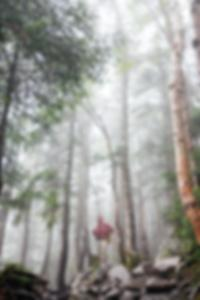 الثلاثي مقلاع الخام يبصقون